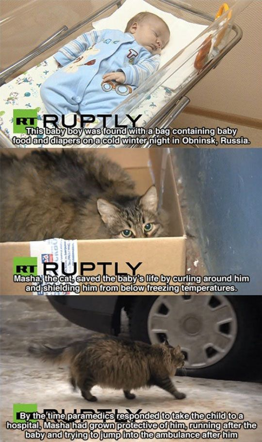 Masha The Cat Adopted