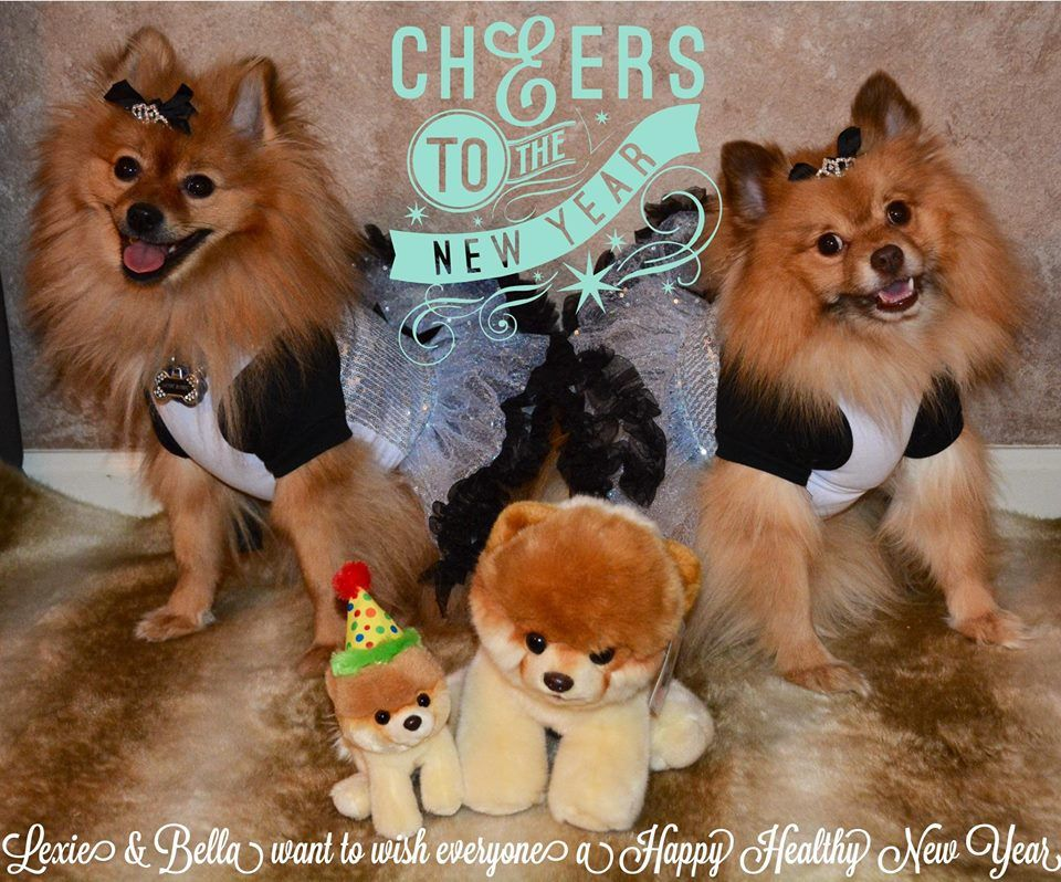 Pomeranian Products Shop Pomeranian Pug Puppies New Years Eve Dresses