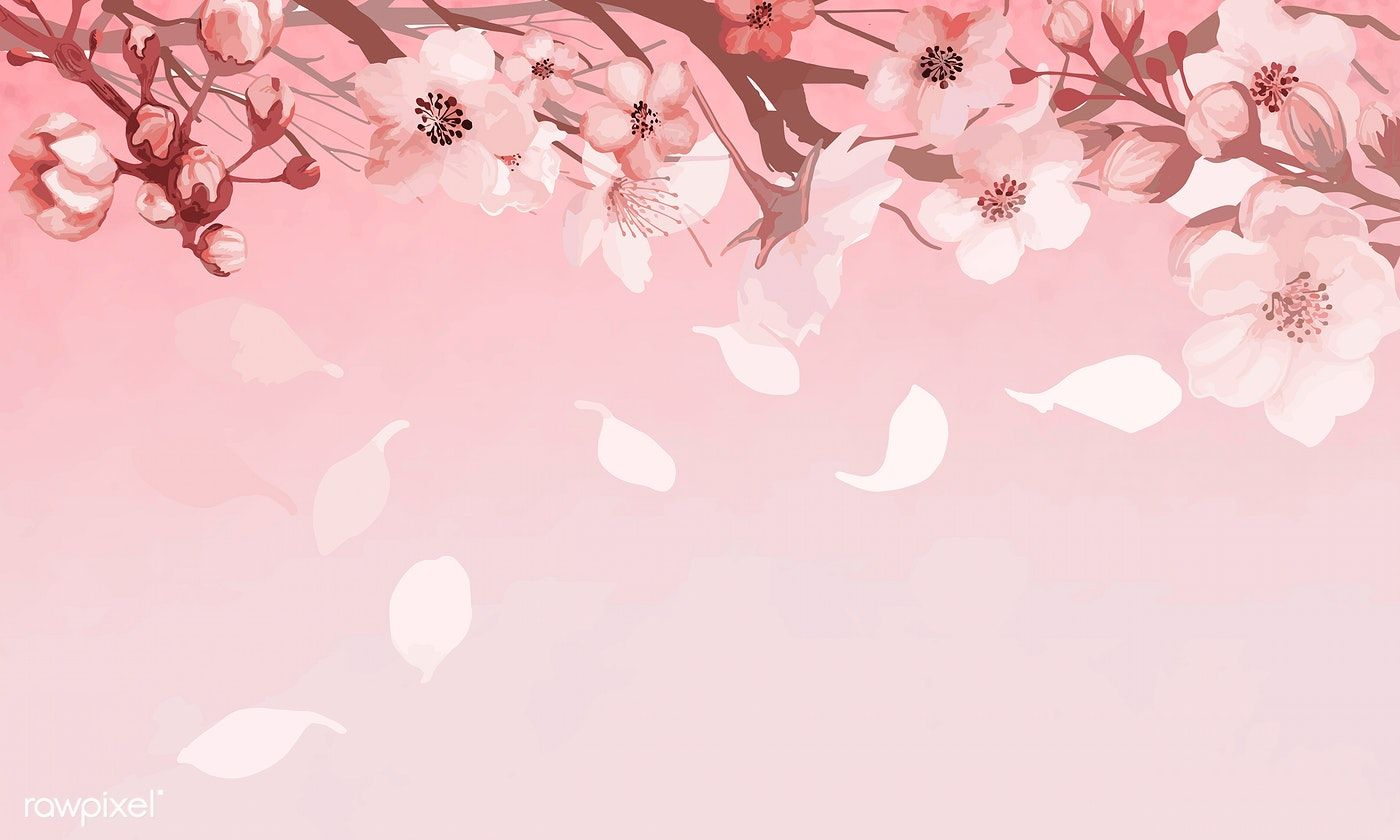 Download Premium Vector Of Hand Drawn Cherry Blossoms On A Pink Background Cherry Blossom Background Pink Background Cherry Blossom Drawing