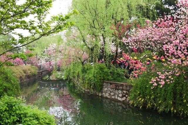 china - Wuxi-Li-Garden-blossoming-trees-DvYang | China | Pinterest ...