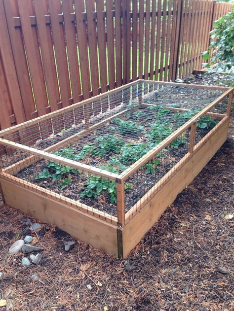 How to build a strawberry cage Gardens, Garden ideas and Yards