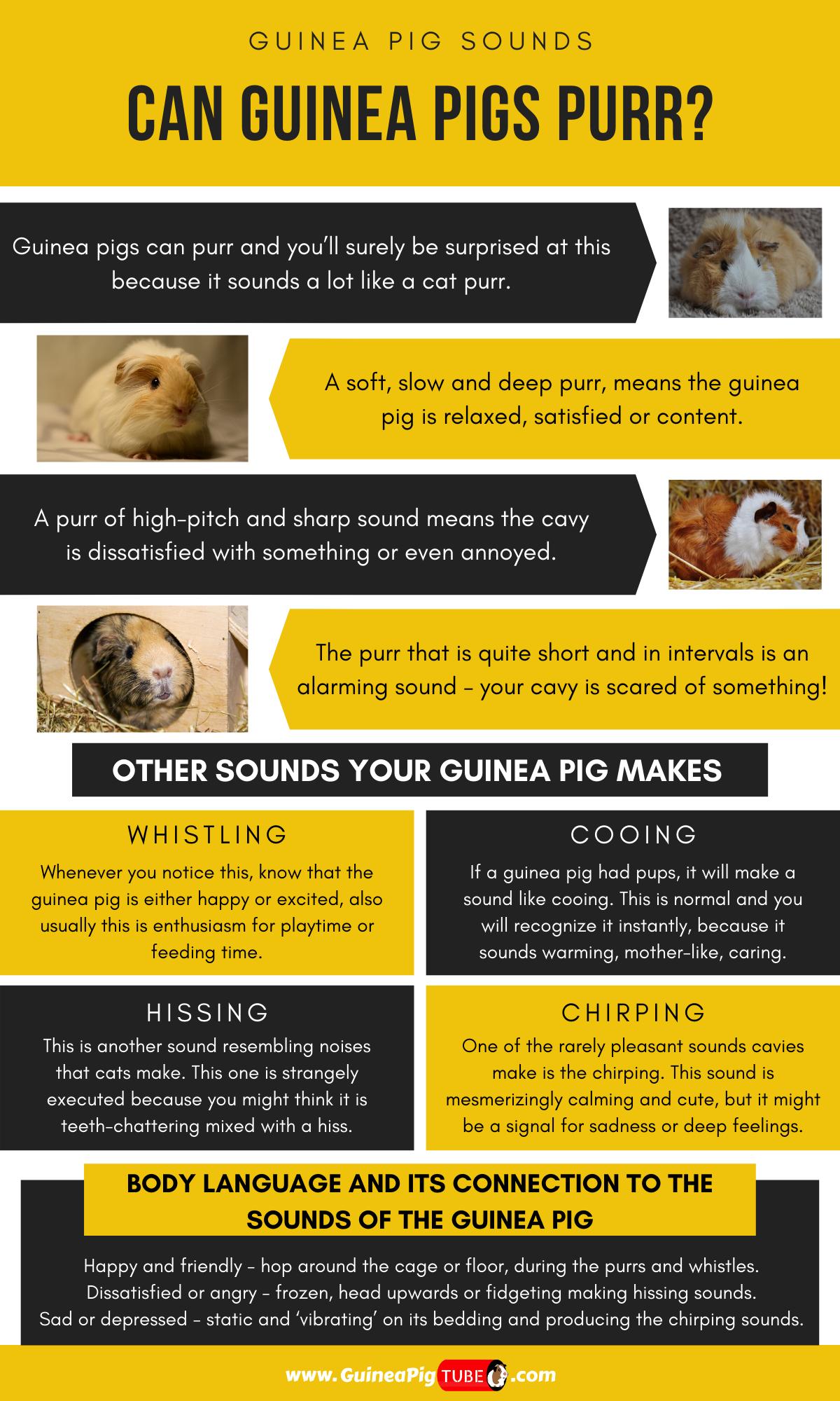 Pin On Guinea Pigs Behavior