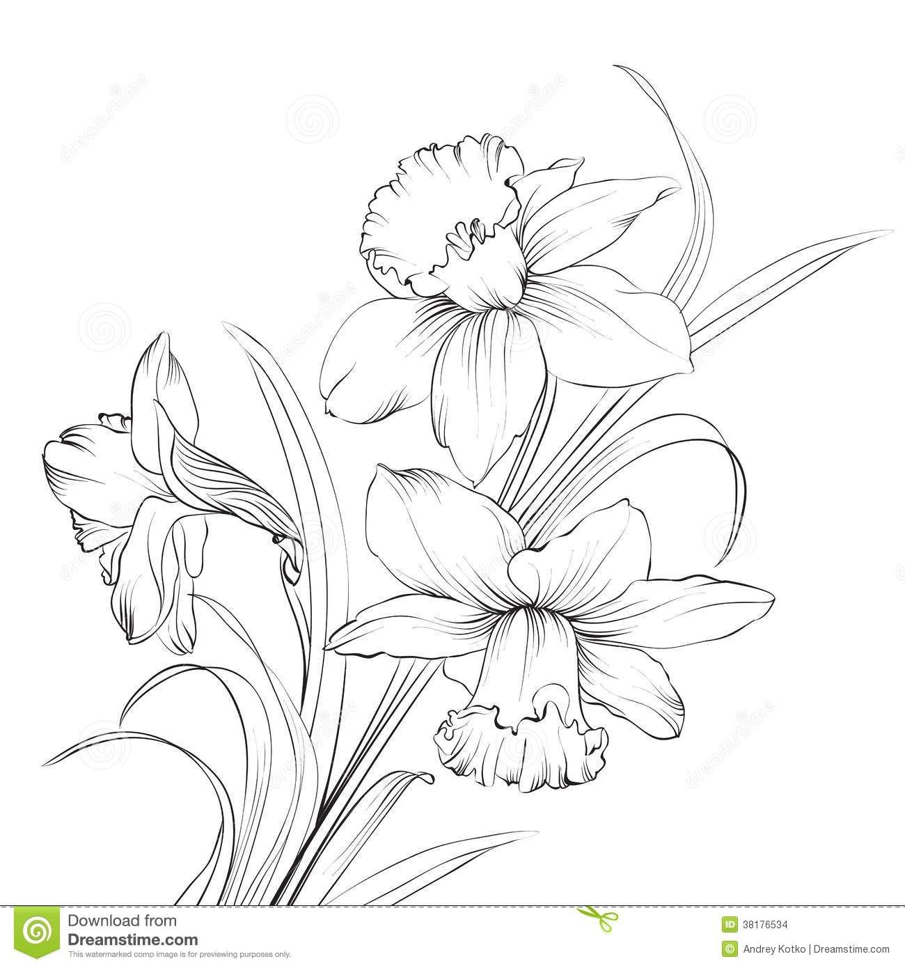Narcissus Stock Illustrations 2 092 Narcissus Stock Illustrations Vectors Clipart Daffodil Tattoo Flower Drawing Birth Flower Tattoos