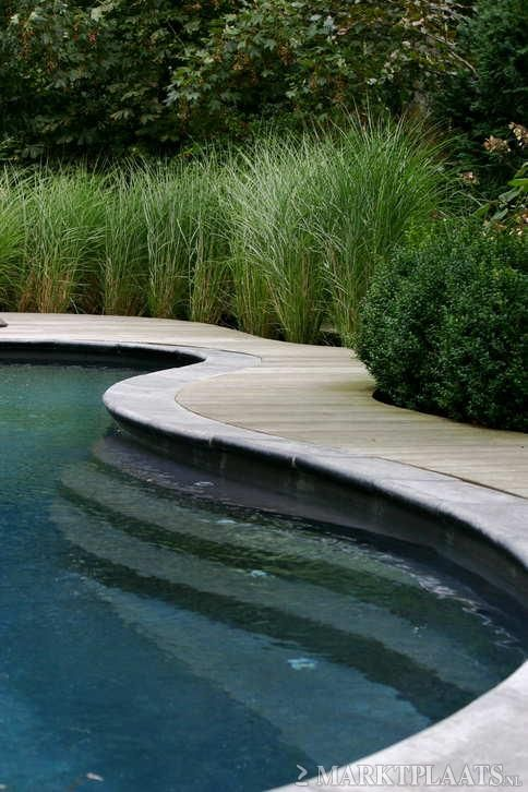Many ornamental grasses adapt beautifully to placement by a swimming