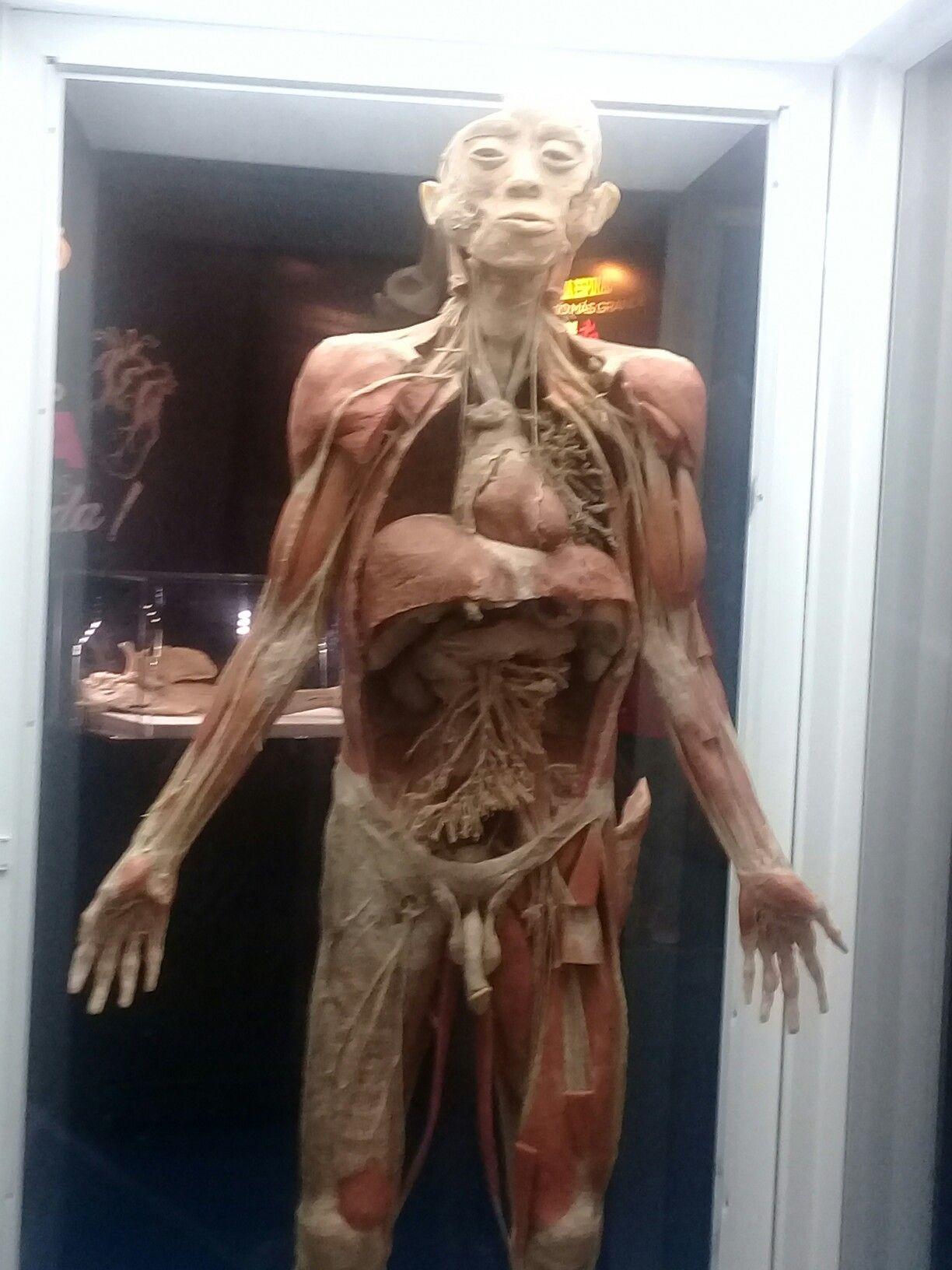 Interior Cuerpo Humano | El Cuerpo Humano | Pinterest | Cuerpo ...