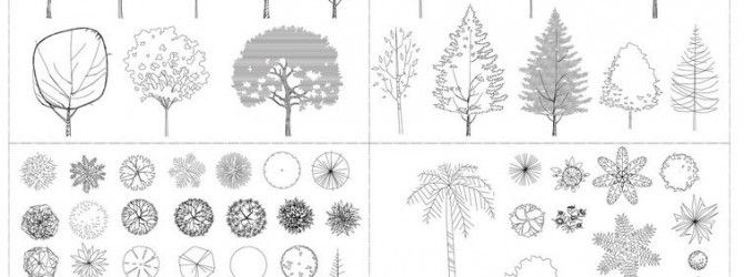 autocad tree collection architectural resources - Architecture Drawing Of Trees
