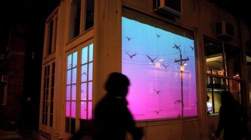Window:: Bird on a Wire