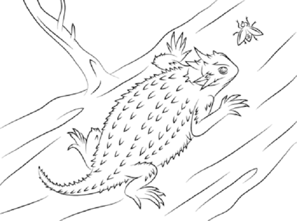 Horned Lizard Coloring Pages Coloring Kids Coloring Pages