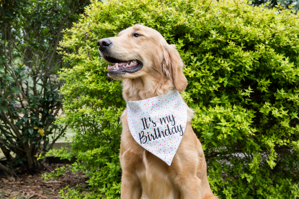2 styles and 4 sizes available Love XOXO Dog Bandana EXCLUSIVE