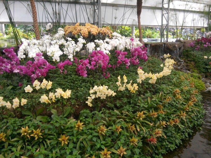 Orquideas jardines de mexico mexico lindo y querido for Jardines de orquideas