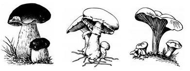 Conoscere i funghi, commestibili e velenosi