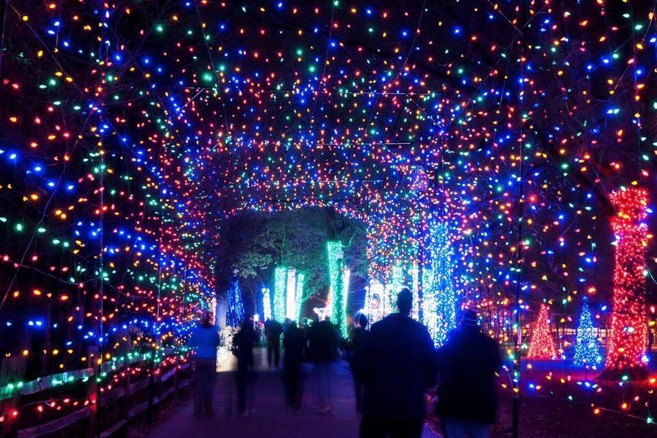 The Detroit Zoo Will Light Up The Night Again This Holiday Season With Wild Lights A Spectacula Best Christmas Light Displays Best Christmas Lights Zoo Lights