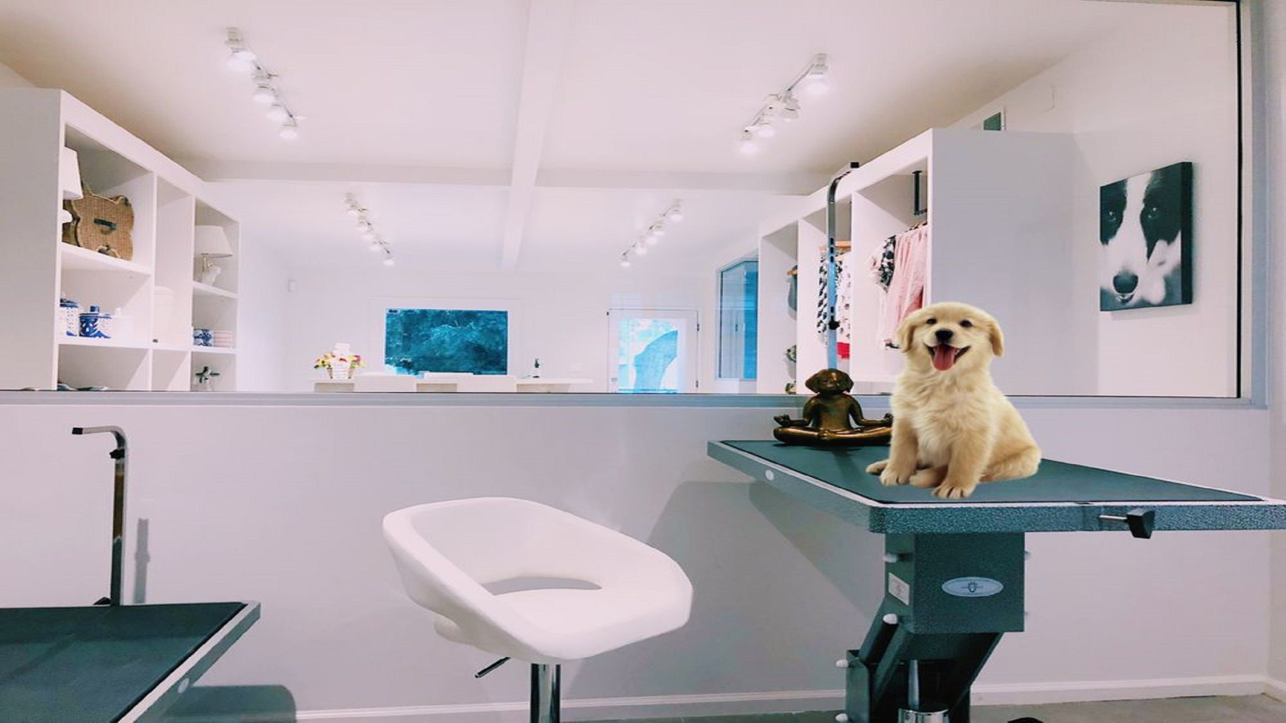 Most professional Pets Grooming West Hollywood CA will