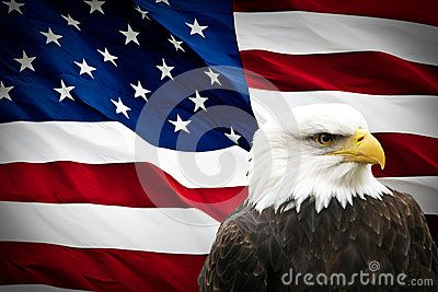 North American Bald Eagle On American Flag American Flag Background Bald Eagle American Bald Eagle