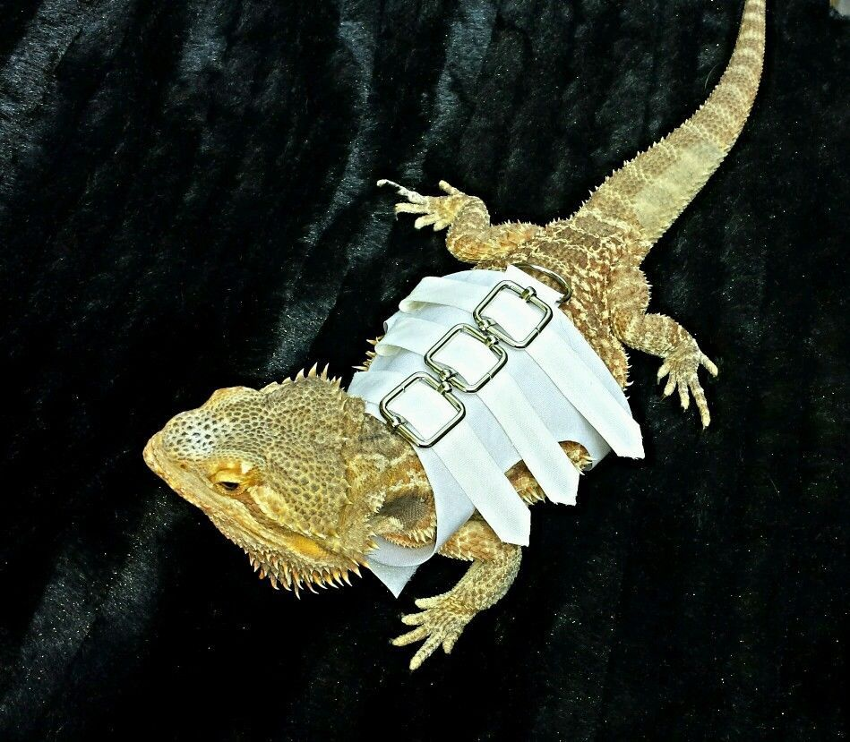 Lil' Bestie Bearded Dragon Harness And Leash STRAIGHT