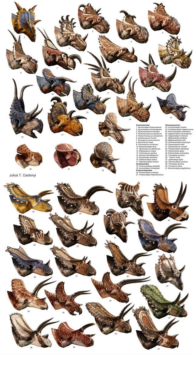 Ceratopsians: #prehistoricanimals