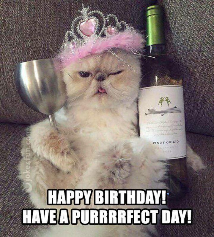 101 Funny Cat Birthday Memes Happy Birthday Have A Purrfect Day Happy Birthday Funny Cats Cat Birthday Memes Happy Birthday Cat