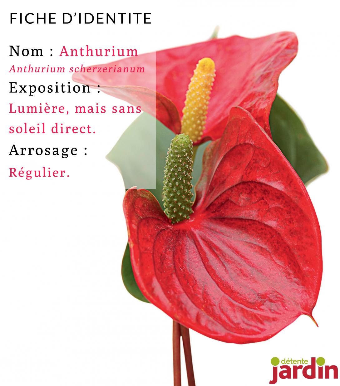 4 plantes d'intérieur spécial débutants | plantes d'intérieur