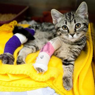 Please Help This Lil Sweetie With Her Broken Legs Please Help This Little Sweetie With Medical Costs Of 3 Broken Bones She Was Hit Kittens Cats Broken Leg