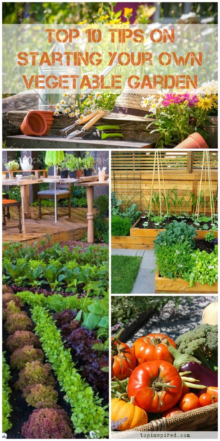 TOP 10 Tips on Starting Your Own Vegetable Garden