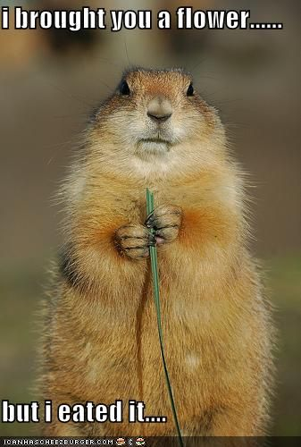 Prairie dogs are the cutest things ever. And the most awesome.