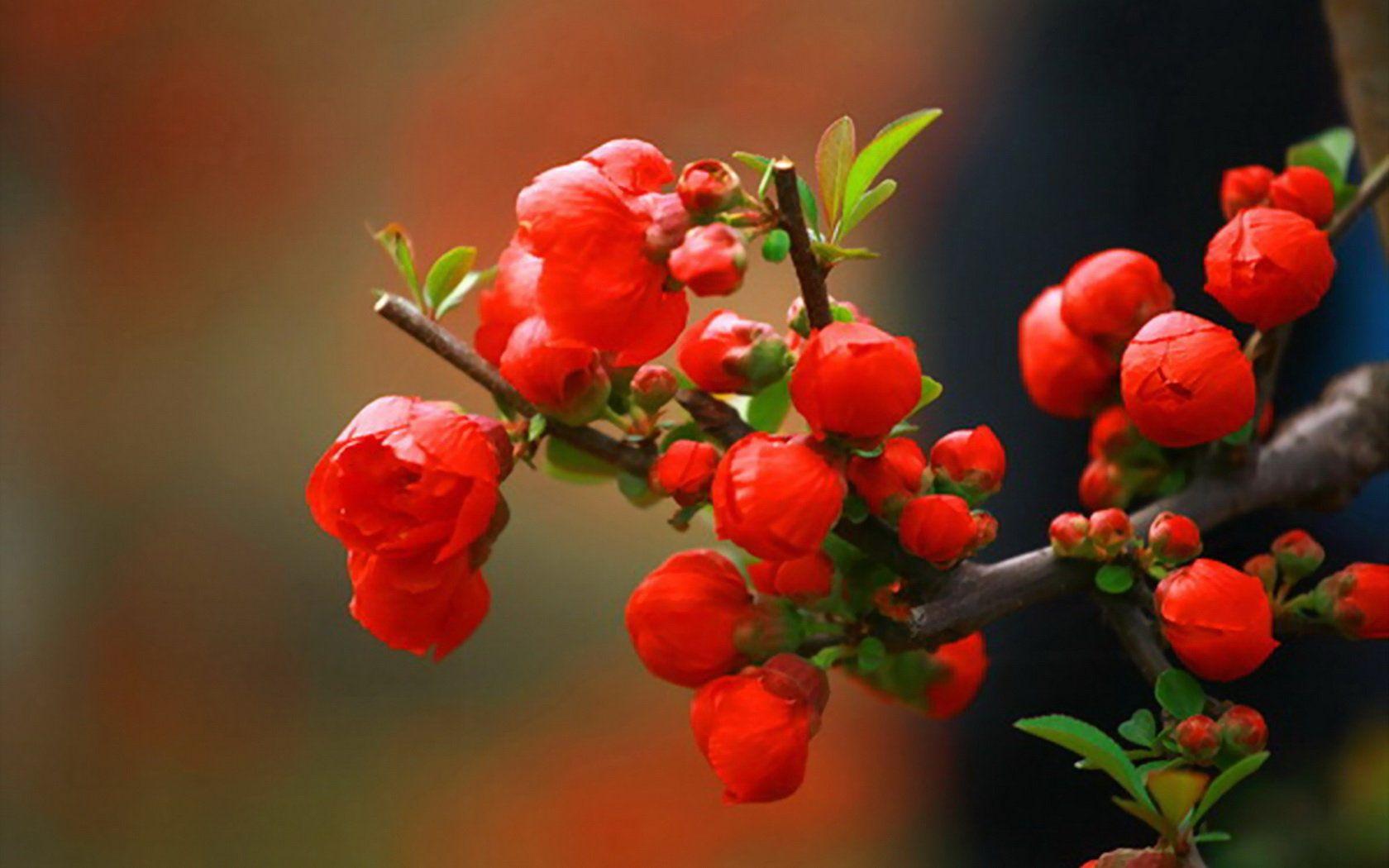 I just love flowers flowers u plants pinterest flowers and plants
