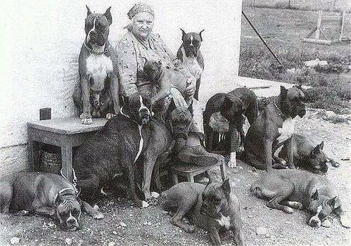 Собаки прошлых лет со всего света. - Страница 18 - PesIQ