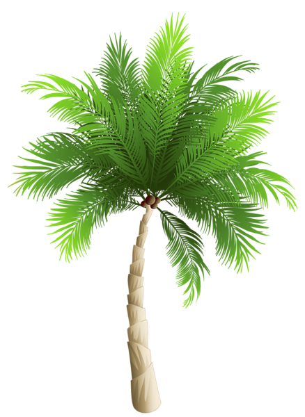Palm Tree Png Clipart Image Palm Tree Art Palm Tree Png