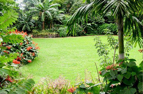 Pinecrest Garden Wedding And Event Venue In South Miami Fl Pinecrest Gardens Botanical Gardens Near Me Buchart Gardens