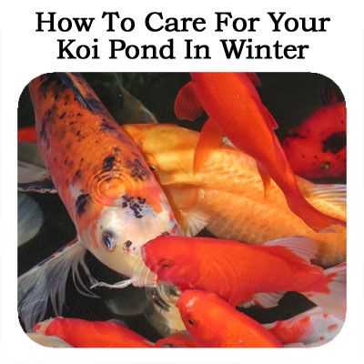 How To Care For Your Koi Pond In Winter Video Koi Pond and Winter