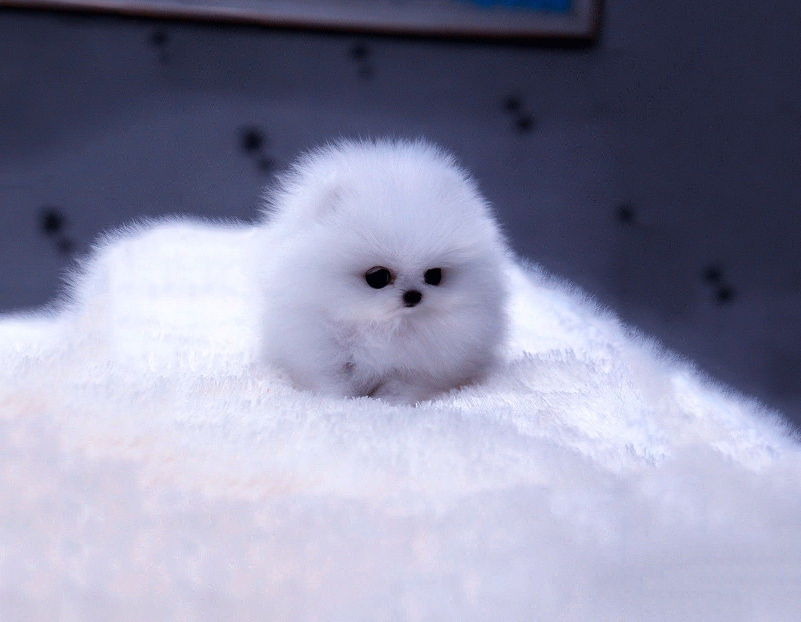Here Are The 16 Fluffiest Animals On The Planet. They're ... |Cute Fluffy Talking Animals