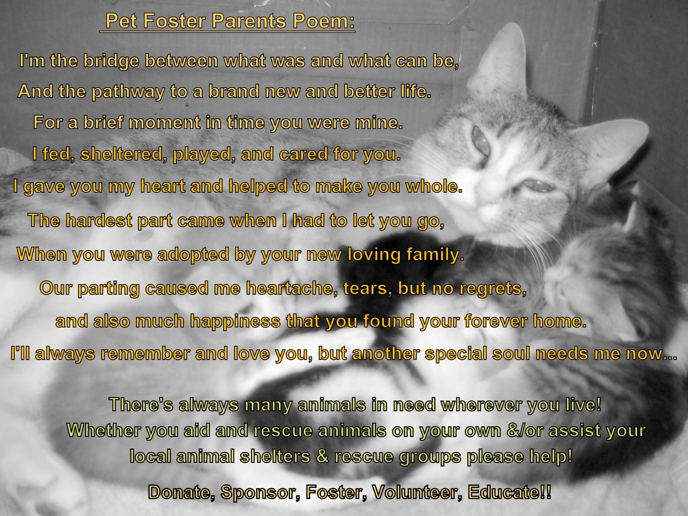 Pet Foster Parent S Poem To All Those Who Foster Rescue Love Animals Like Myself Made With Photo Of One Of The Str Pregnant Cat Parents Poem Pet Loss Cat