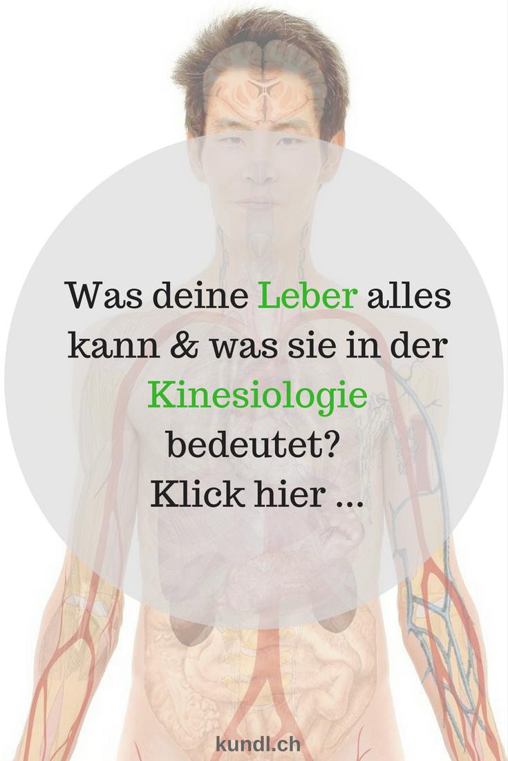 Anatomie & Physiologie deiner Leber sowie die Lage und ihre Aufgaben ...
