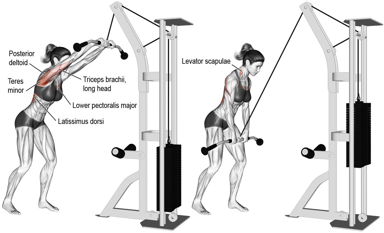 Musculation dos poulie - Vigilance envers l adversaire c0343826039