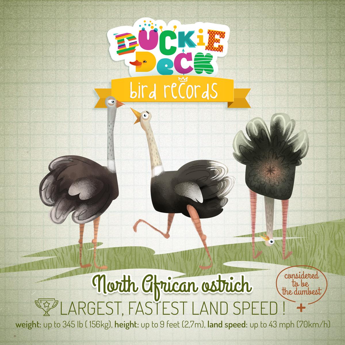bird facts | largest, fastest land speed | bird | fun ...