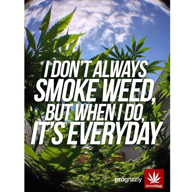 Smoke Weed Everyday With Stonerdays Hemp Wallpaper Mobile Humor
