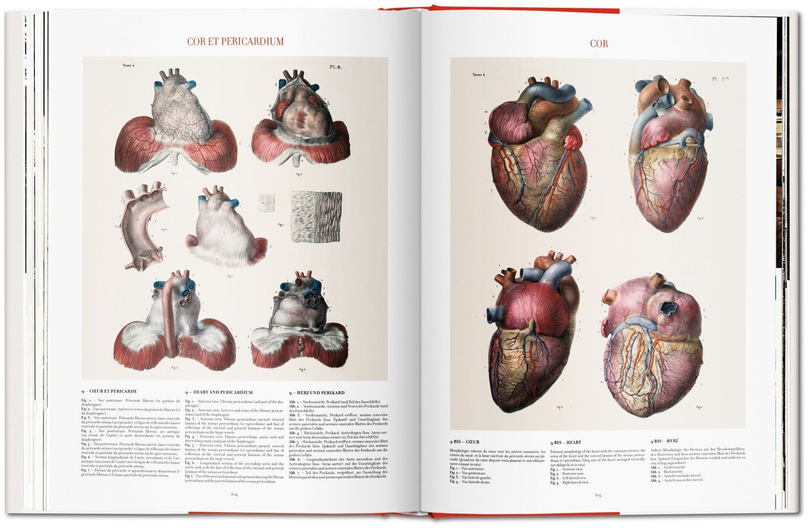 Bourgery. Human Anatomy and Surgery. TASCHEN Books | 版式 ...