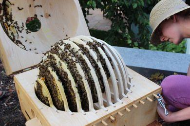 bienenkugel bionik bienen pinterest bienen imker und bionik. Black Bedroom Furniture Sets. Home Design Ideas