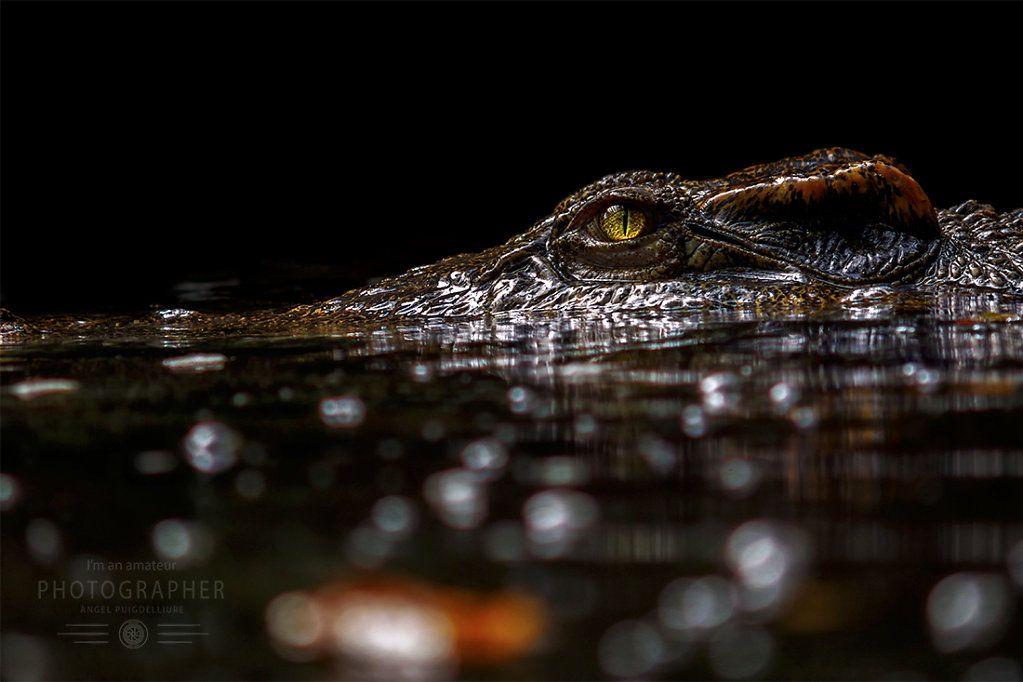 Crocodile Swamp Sri Lanka