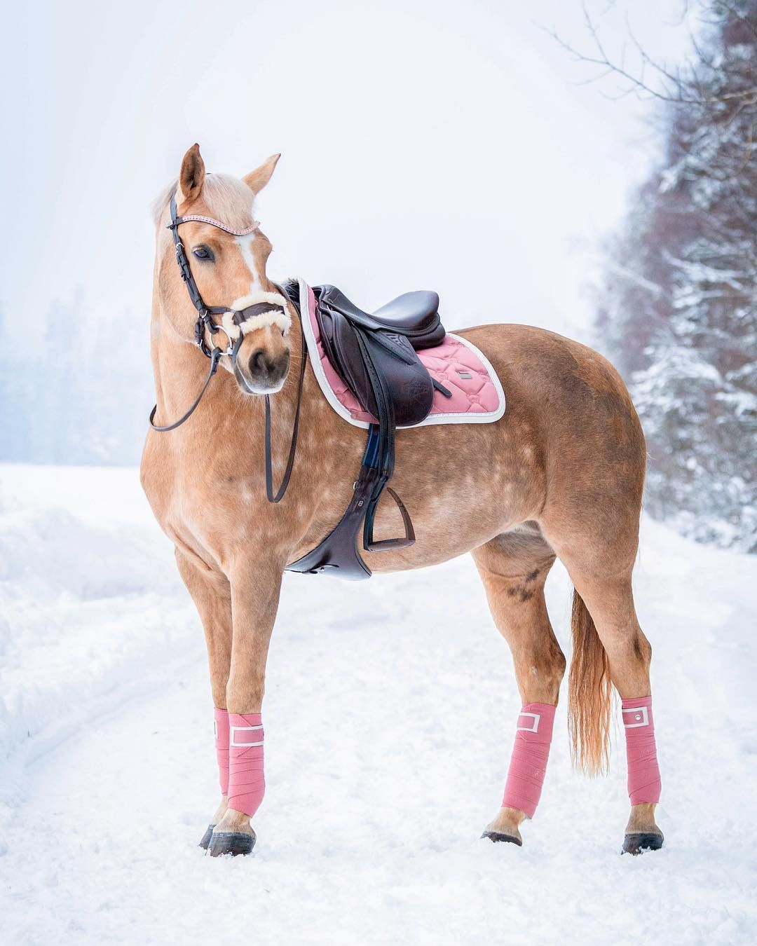 How Cute Does Goldi Look All Dressed Up In Her New Rose Saddlepad Sponsored By Psofsweden Matching Bandages And Browband With Pale Pink Con Imagenes Caballos