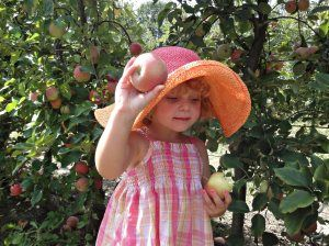 10 Things Every Child Should Experience in Summer. (Apple Picking  is #5)