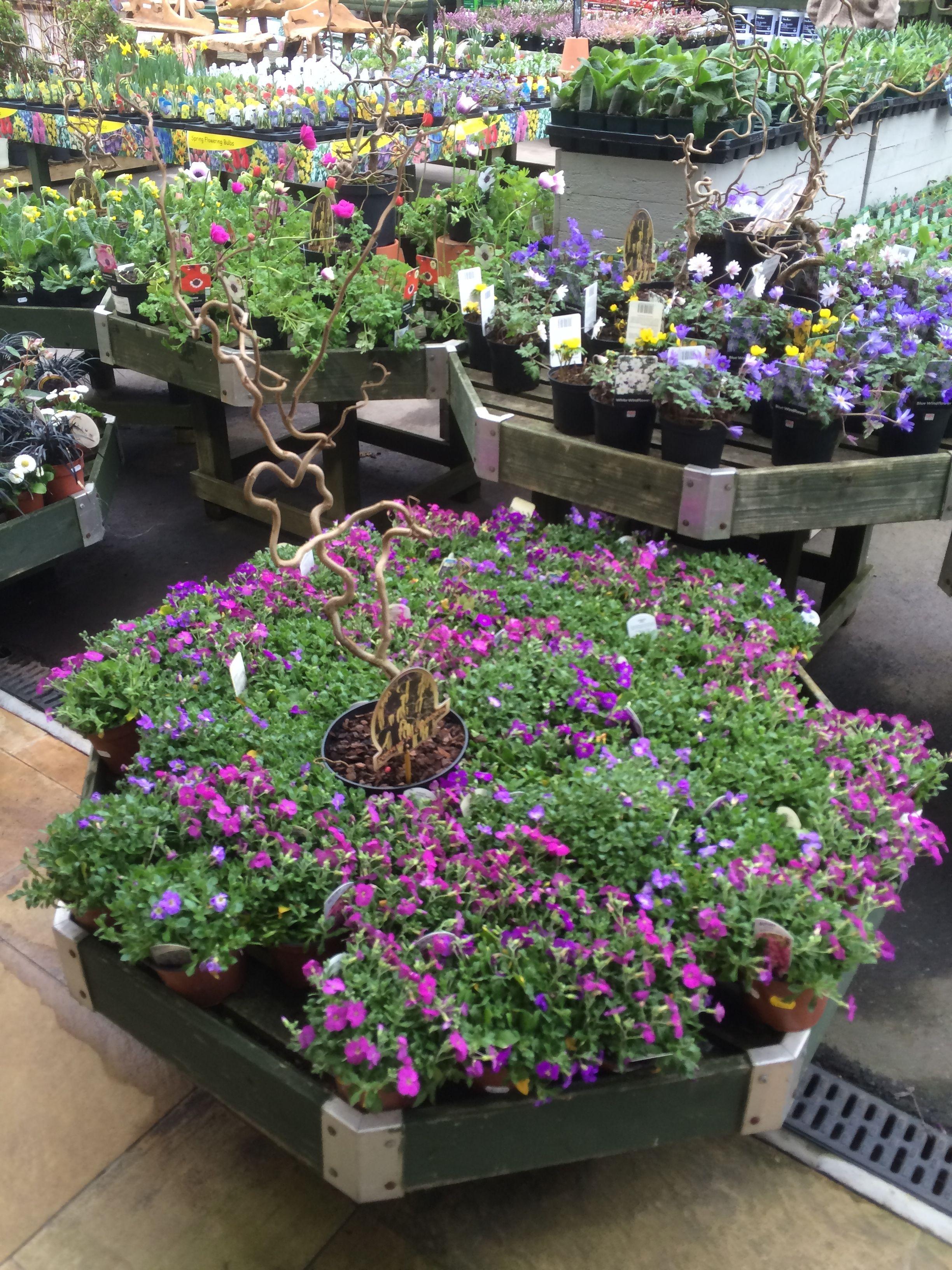 Spokane Nurseries Garden Centers Thenurseries