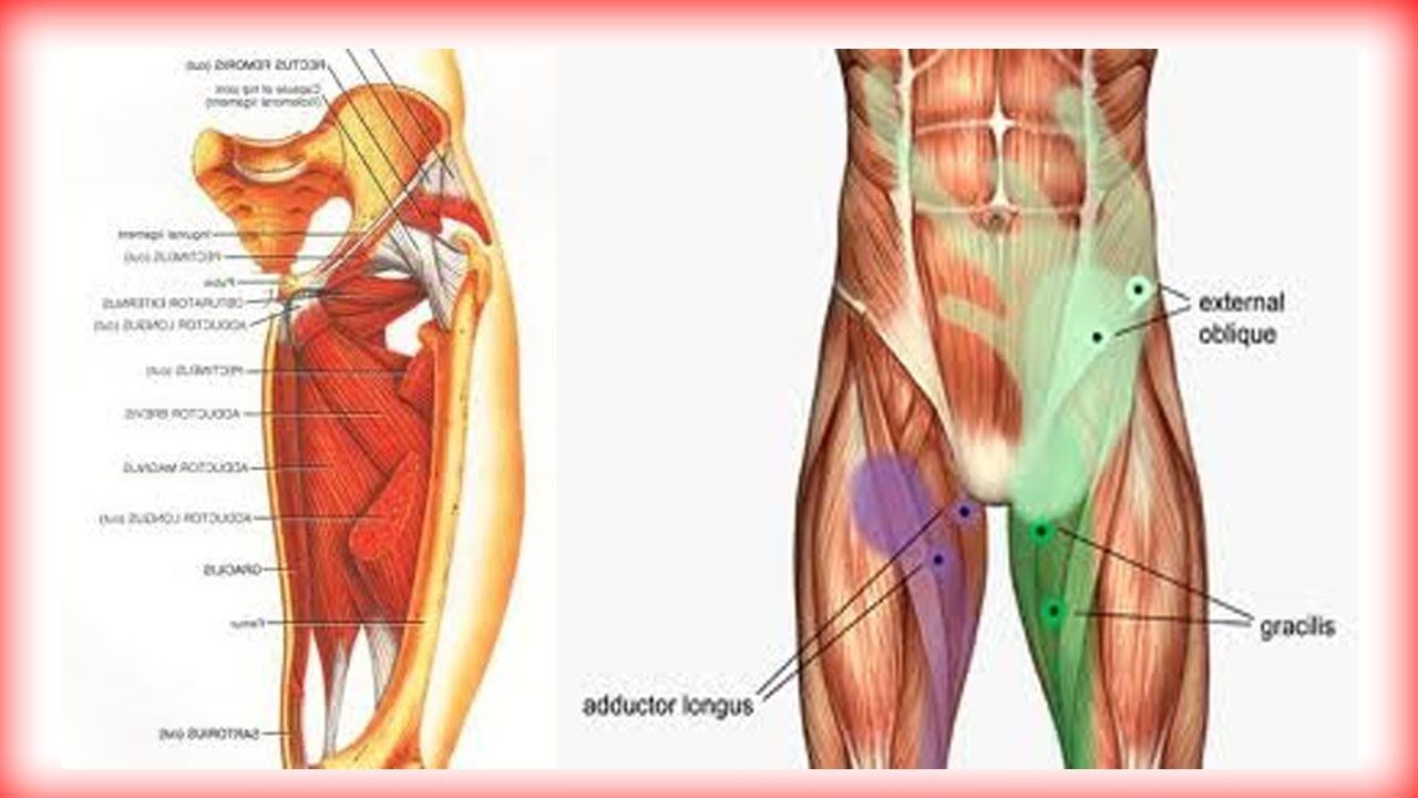 pics inner and outer thigh muscles - 1280×720