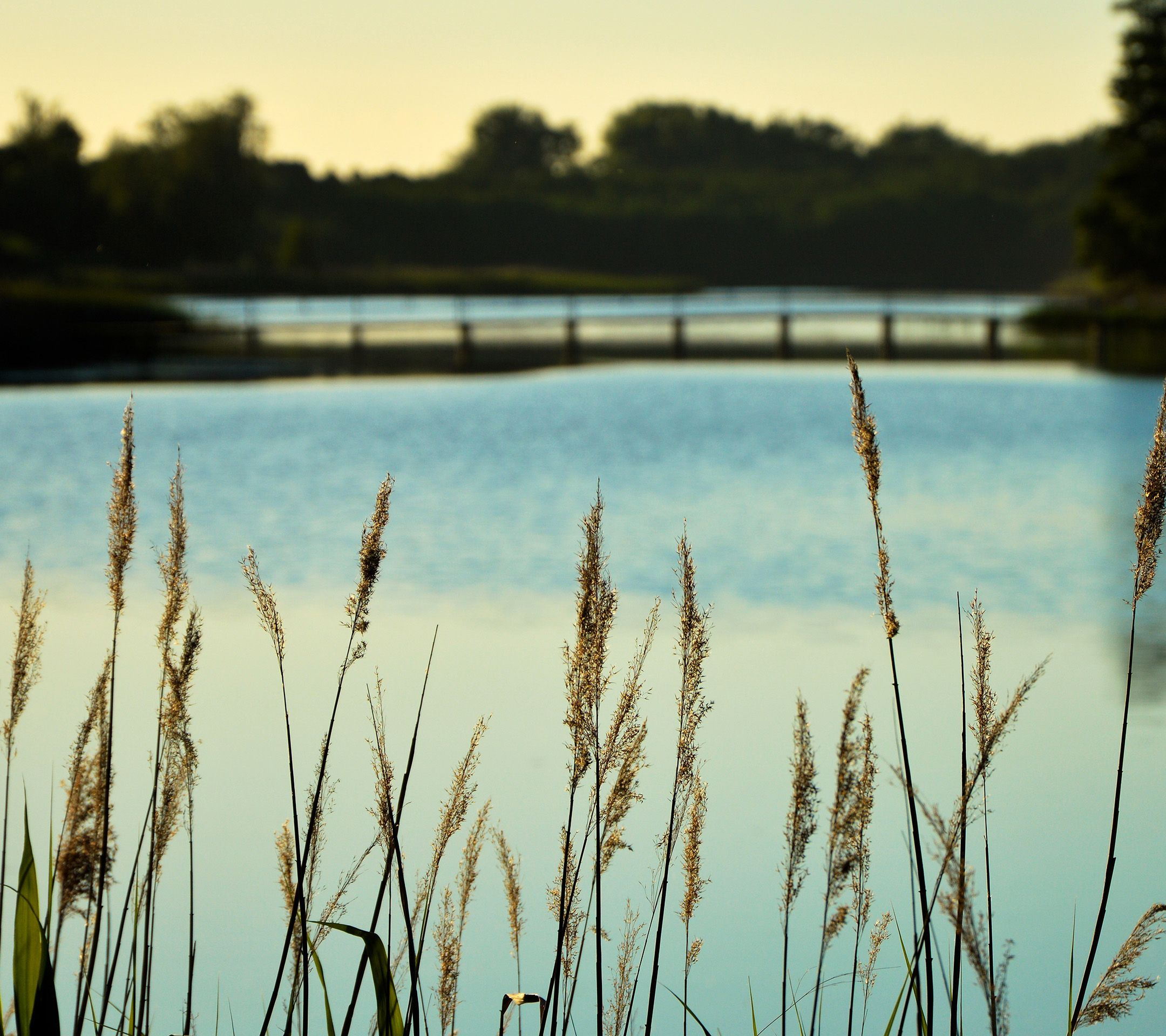 http://bit.ly/1WoqTgQ - AndroidPapers.co wallpapers - mw73-lake-view-flower-water-calm-nature-bokeh - Android, wallpaper