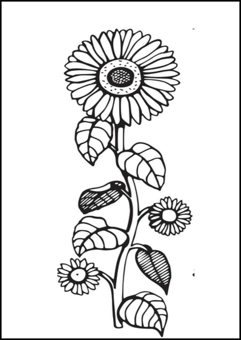 dibujo de un girasol para colorear | Letras/Varios | Pinterest ...