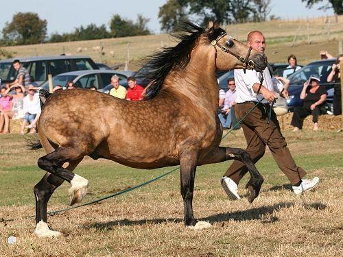 Draft Horses Profile Horses