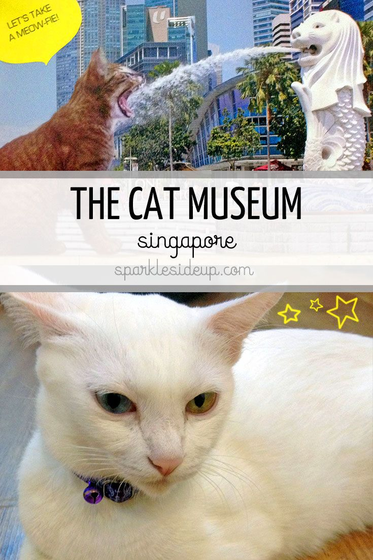 A visit to Singapore's Cat Museum Crazy cats, Cats, Can