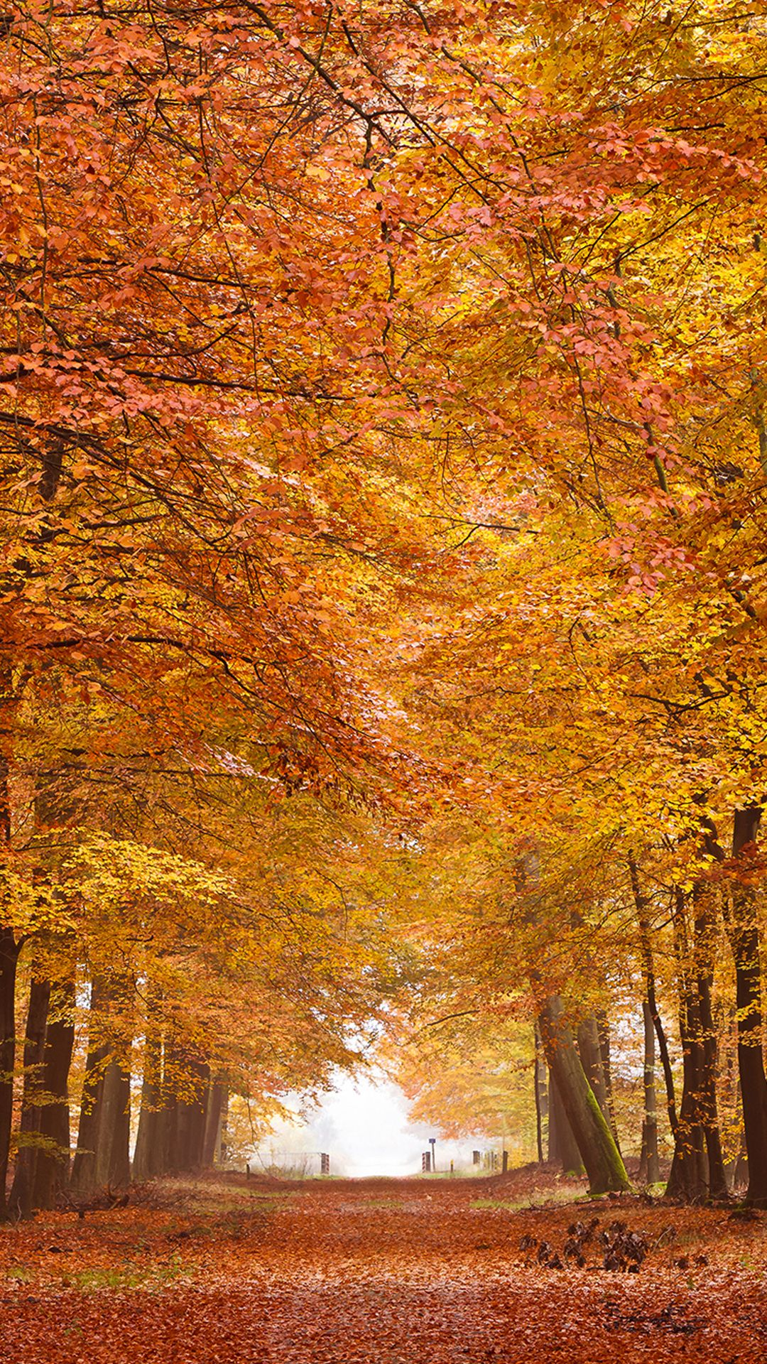 Fall Wallpaper Hd Resolution Hupages Download Iphone Wallpapers Fall Wallpaper Free Fall Wallpaper Android Wallpaper