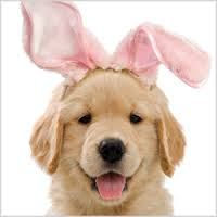 Happy Easter from OC RAW DOG!