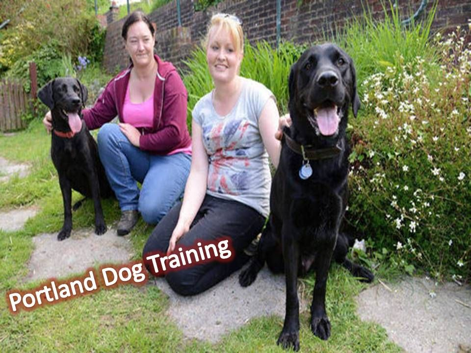 dog training portland oregon